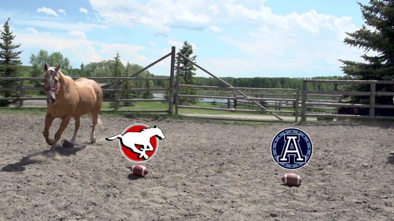 Stampeders Horse Predictor – 07.18.19