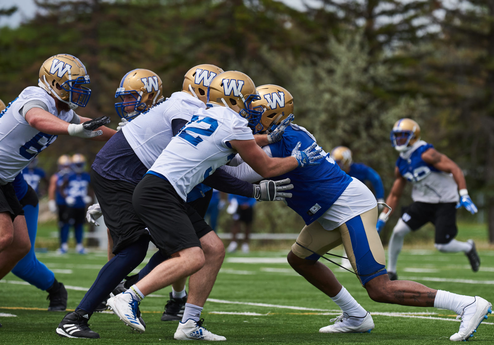 Battle in the trenches - Winnipeg Blue Bombers